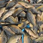 Диета с риба