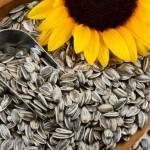 Слънчогледови семки за вашата диета