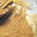 Диетата с жито на Петър Дънов