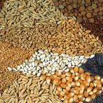 Диета със семена